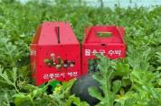 예천군농업기술센터, 지역 맞춤형 소과종 수박 홍보‧판매 행사 진행