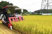 경북 영주서 올 첫 벼베기··· '8·15 광복쌀' 수확